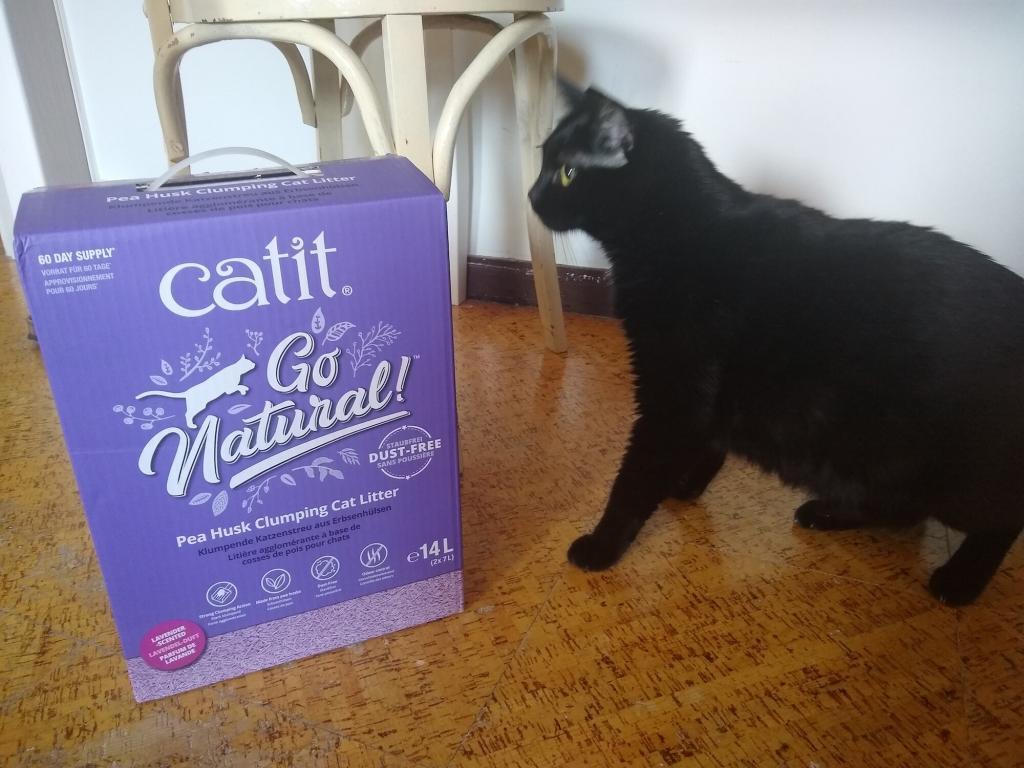 The Best Clumping Cat Litter