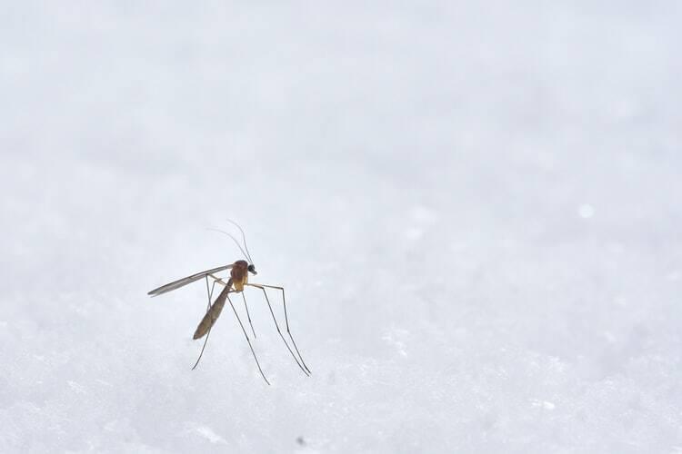 Receta de albahaca para picaduras de insectos y otras mordeduras